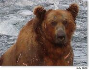 603 July 2020 NPS photo 2021 Bears of Brooks River book page 71