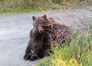 132 and sping cub September 14, 2018 photo by Lee Pastewka (aka RiverPA) .01