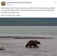 INFO BEARS SEEN 2018.06.08 15.51 KNP&P FB POST w PHOTO OF 634