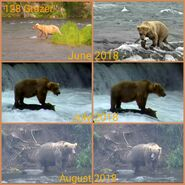 128 Grazer 2018 snapshot collage by Cruiser