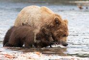 803 and 2 spring cubs July 17, 2020 photo by Lee Pastewka (aka RiverPA) .04