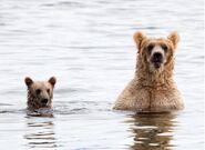 435 and spring cub Jul 17, 2020 photo by Lee Pastewka (aka RiverPA) .02
