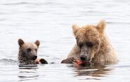 435 and spring cub Jul 17, 2020 photo by Lee Pastewka (aka RiverPA) .10