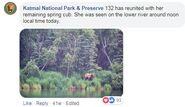 KNP&P FB 2018.07.04 re 856 KILLING 132s SPRING CUB 01 2018.07.05 UPDATE 132 & CUB REUNITED