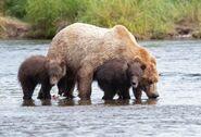 803 and 2 spring cubs July 17, 2020 photo by Lee Pastewka (aka RiverPA) .02
