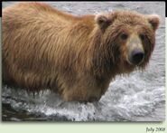 790 WEEVIL BEAR PIC 2008.07.xx 6.5 YEAR OLD in 2012 BoBr iBOOK 01