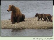130 TUNDRA PIC 2007.07.xx 409 BEADNOSE w SPRING CUBS 130 TUNDRA & ARCTIC in 2012 BoBr iBOOK 02