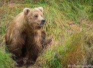 273 and spring cub 809 Late July 2015 photo by ©Theresa Bielawski .04