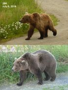 2014 FAT BEAR TUESDAY 2014.09.30 08.30 KNP&P FB POST 284 2014.07.06 vs 2014.09.06 PHOTO ONLY
