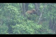 505 PIC 2018.08.02 w 2 SPRING CUBS GOLDILOCKS POSTED 2019.06.05 14.25 02