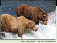 6 HEADBOB - BULLET PIC 2006.xx.xx 6 LEFT w 16 CINNAMON RIGHT in 2012 BoBr iBOOK 01