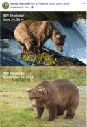 2014 FAT BEAR TUESDAY 2014.09.30 14.00 KNP&P FB POST 409 BEADNOSE 2014.06.24 vs 2014.09.24