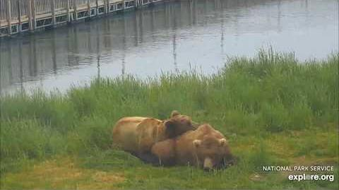 06.28.2018 - 151 Walker and 708 Amelia Cuddle on the Lower River by Brenda D-0