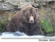 83 Wayne Brother October 2020 NPS photo 2021 Bears of Brooks River book page 62 .02
