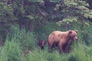 RANGER RUSS COMMENT 2018.07.05 13.06 re 12.08 PHOTOS OF 132 w REMAINING SPRING CUB 01 & 02 PIC 02 ONLY