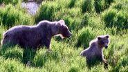 128 Grazer and 1 of 2 yearlings June 7, 2021 NPS photo by Ranger Naomi Boak (aka NSBoak)