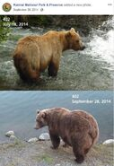 2014 FAT BEAR TUESDAY 2014.09.30 12.00 KNP&P FB POST 402 2014.07.18 vs 2014.09.28