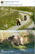 2014 FAT BEAR TUESDAY 2014.09.30 08.30 KNP&P FB POST 500 INDY 2014.07.05 vs 2014.09.27