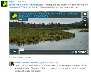 803 INFO 2020.07.04 SMALLEST SPRING CUB RUNT FALLS & ROLLS 2x MIKE FITZ 2020.07.08 05.15 COMMENT re FIRST SIGNS OF EQUILIBRIUM ISSUES MAYBE