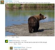 INFO BEARS SEEN 2018.06.01 17.00 409 or WHO RANGER RUSS 2018.06.02 09.54 COMMENT MAY NOT BE 409