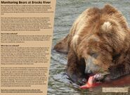 856 PIC xxxx.xx.xx 2018 BoBr PG 21 MONITORING BEARS EATING HIS CATCH PAGE 21