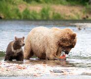 803 and 1 of 2 spring cubs July 17, 2020 photo by Lee Pastewka (aka RiverPA) .03