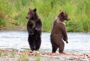 803's 2 spring cubs July 17, 2020 photo by Lee Pastewka (aka RiverPA) .05