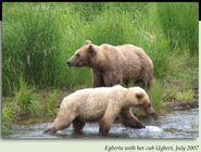403 EGBERTA PIC 2007.07.xx w 2.5 YO CUB UGBERT in 2012 BoBr iBOOK 01