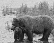BEADNOSE 409 PIC 2016.07.21 xx.xx w 1 of 2 SPRING CUBS VISIBLE TRUMAN EVERTS POSTED 2020.02.02 07.42