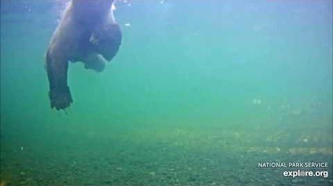 07.01.2018 - Underwater Camera - I think it's 435 Holly again by Brenda D