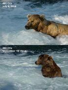 2014 FAT BEAR TUESDAY 2014.09.30 16.37 KNP&P FB POST 480 OTIS 2014.07.04 vs 2014.09.19 PHOTOS ONLY