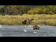 719 and yearlings with 482 subadult 9-21-2020