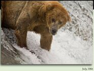 6 HEADBOB - BULLET PIC 2006.07.xx in 2012 BoBr iBOOK 01