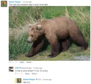 INFO BEARS SEEN 2018.06.01 17.30 RANGER RUSS 2018.06.02 08 09.58 COMMENT SUBADULT OBSERVED 2018.06.01 17.30 IS A MALE PHOTO IN 09.55 COMMENT SHOWS URINE STREAM - SUBADULT PEEING