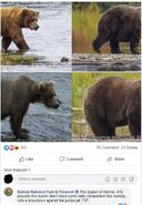2017 FAT BEAR WEEK 2017.10.06 18.05 ROUND 6 410 vs 409 BEADNOSE - 410 WINS KNP&P FB COMMENT