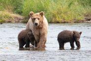 803 and 2 spring cubs July 17, 2020 photo by Lee Pastewka (aka RiverPA) .03