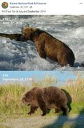 2014 FAT BEAR TUESDAY 2014.09.30 15.30 KNP&P FB POST 410 2014.06.27 vs 2014.09.22