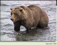 790 WEEVIL BEAR PIC 2009.09.xx 7.5 YEAR OLD in 2012 BoBr iBOOK 01