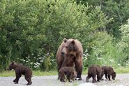 RANGER RUSS COMMENT 2018.07.15 13.56 w 2 PHOTOS OF 402 w 4 SPRING CUBS TAKEN 2018.07.14 PIC 02 ONLY