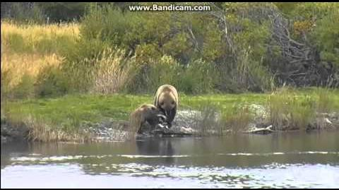 """""""Mum HELP it`s moving"""" cub""""Velcro"""", 273 the fish ) 9-22-2015 video by Martina"""