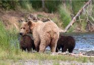 803 and 2 spring cubs July 17, 2020 photo by Lee Pastewka (aka RiverPA) .01
