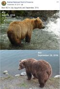 2014 FAT BEAR TUESDAY 2014.09.30 10.00 KNP&P FB POST 402 2014.07.18 vs 2014.09.28