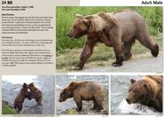 BB 24 INFO 2015 BoBr PAGE 75
