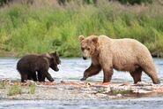 803 and 2 spring cubs July 17, 2020 photo by Lee Pastewka (aka RiverPA) .07