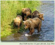 438 FLO PIC 2004.07.xx w 3 2.5 YEAR OLD CUBS in 2012 BoBr iBOOK
