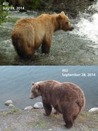 2014 FAT BEAR TUESDAY 2014.09.30 12.00 KNP&P FB POST 402 2014.07.18 vs 2014.09.28 PHOTOS ONLY