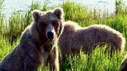 128 Grazer and 2 yearlings June 7, 2021 NPS photo by Ranger Naomi Boak (aka NSBoak) .06