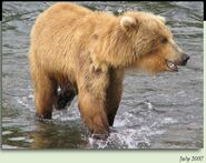 790 WEEVIL BEAR PIC 2007.07.xx 5.5 YEAR OLD in 2012 BoBr iBOOK 01