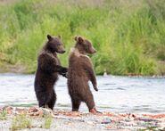 803's 2 spring cubs July 17, 2020 photo by Lee Pastewka (aka RiverPA) .03