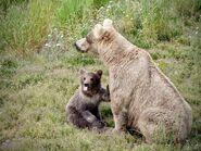 435 Holly and spring cub June 30, 2020 NPS photo by NSBoak (aka Ranger Naomi Boak)